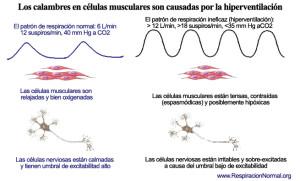 La hiperventilación causa calambres en las células musculares