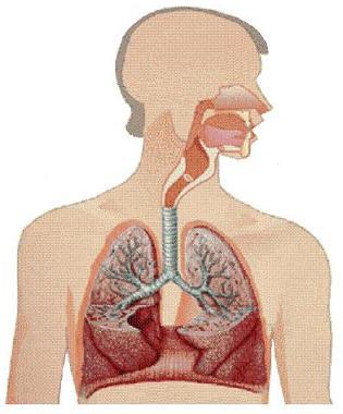 Efectos del Ejercicio en el Sistema Respiratorio