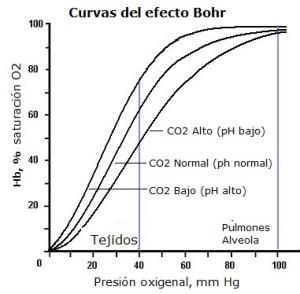 efecto-bohr3